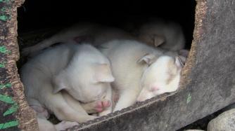 Zum Schluss waren die Welpen ganz schön müde!