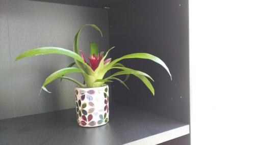 Die Zimmerpflanze hat es auch heil geschafft