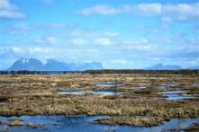 Blick übers Moor und im HIntergrund die Bergkette der Insel Senja